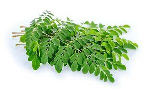 Moringa Oleifera - Árbol Milagroso 3 (semillas) seeds - Bonsai - Garden