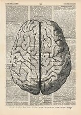 Anatomical Brain Dictionary Art Print, Medical Gross Anatomy Grey's Vintage