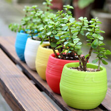 Blue Mini Round Plastic Plant Flower Pot Garden Home Office Decor Planter