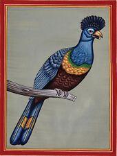 Great Blue Turaco Miniature Art Handmade Indian Nature Bird Watercolor Painting