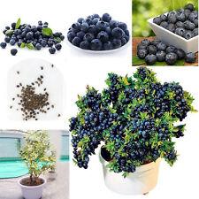 Perennial 50pcs Sweet Blueberry Seeds Highbush Fruit  Potted Bonsai Seeds New
