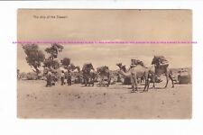 CAMELS Afghan Cameliers PORT DARWIN postcard c.1900s AUSTRALIA