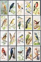 1939 Carreras Birds of the Countryside Tobacco Cards Complete Set of 50