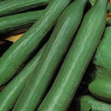 Vegetable - Cucumber - Pepinex - 4 Seeds