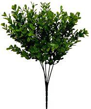 Boxwood Bush 13