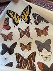 "Vintage Set 5 Smokey Bear Art Poster Set Birds Trees Butterflies 20"" By 29"""
