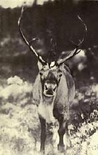 Wild Life and The Camera Book CD 1912 many photos