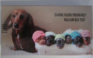 Canine Feline cat dog pregnancy test Relaxin test