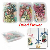 Assroetd Real Dried Flowers Pressed Leaves DIY For Epoxy Resin Jewelry Making