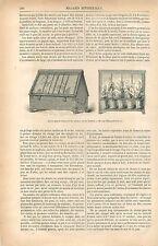 Caisse de Ward Serre portable Muséum d'Histoire Naturelle GRAVURE OLD PRINT 1877