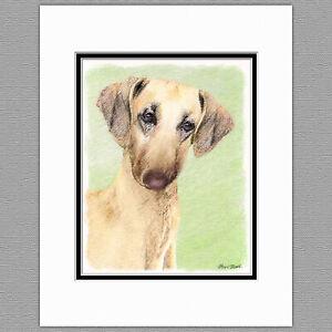 Sloughi Dog Original Art Print 8x10 Matted to 11x14