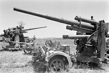 WW2 Photo WWII Captured Axis German 88mm  Anti-Tank Guns Tunisia 1943    / 4154