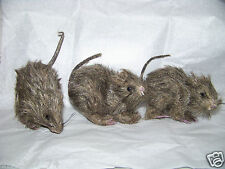 3 pc Set HALLOWEEN Party Haunted House Decoration Prop Realistic HAIRY RATS