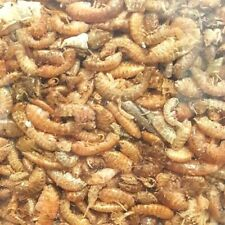 BABY Red Shrimp Freeze Dried Sz Small & Medium Fish, Koi, Turtles! FAST SHIPPING