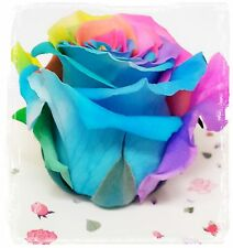 Send Giant Preserved Eternal Real Multi Color Rose 4' Fresh Natural & Gift Box $