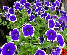 PETUNIA MULTIFLORA PICOTEE BLUE - 400 seeds - Petunia hybrida multiflora nana