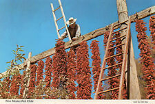 postcard USA  New Mexico red Chile  unposted