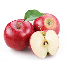 50 Mixed Sweet Apple Seed Malus Domestica Fresh Fruit Tree Plant Bulk Seeds S018