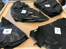 Black Shagreen Stingray Skin Scraps