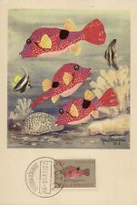 CARTE POSTALE MAXIMUM MARCEL BOURGEOIS - POISSONS DE MOZAMBIQUE 1955