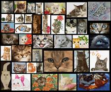 OLTRE 400 SCHEMI A PUNTO CROCE GATTI MICI GATTINI CAT KITTEN DMC PATTERN QUALITA