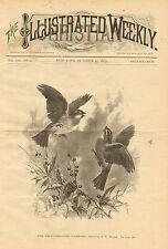 Birds, White Throated Sparrow, Vintage, 1884 Original, Antique, Art, Print,