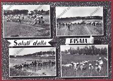 MONDINE 169 MONDARISO RISO Saluti dalla RISAIA Cartolina viagg. 1960 REAL PHOTO