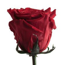 Infinity Rose konserviert mit Stiel haltbar 3 Jahre ewige Rose 50-55 cm lang