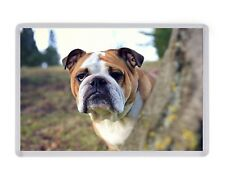 English Bulldog Fridge Magnet Birthday Fathers Mothers Day Christmas Gift
