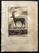 1799 - Buffon - La gazelle Tzeïran - Gravure zoologie