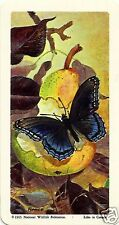 RED ROSE TEA CARD, SERIES: BUTTERFLIES OF NORTH. AMERICA: RED-SPOTTED PURPLE