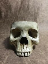 FeMale Real Human Skull Replica Drinking cup bowl food safe pet bowl -Zane Wylie