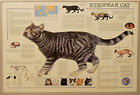 (PRL) 1992 EUROPEAN CAT GATTO EUROPEO CHAT EUROPEEN AFFICHE PRINT ART POSTER