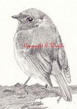 "ACEO 2.5"" X 3.5"" Print of Original ROBIN #3 Bird Miniature Pencil Drawing"