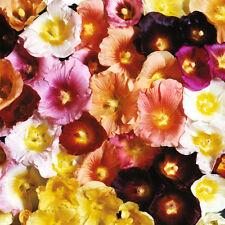 90 Graines de Rose Trémière à Feuilles de Figuier / Guimauve / Fleur Vivace