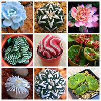 Real Mini Succulent Seeds Plants Cactus Bonsai Perennial Rare 1000pcs/bag