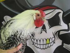 18+ Super Rare Silver Deathlayer Chicken fertile hatching eggs