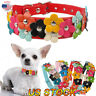 Dog Collar Puppy Pet Collor Small Medium Large Flower Studded Leather Coller US