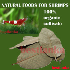 15pcs fresh Dried Guava Leaves - anti-bacteria Relieve Natural Shrimps food