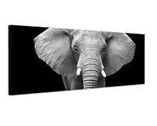 150x50cm Panoramabild Schwarz Weiss - Elefant Kopf Nahaufnahme Wildnis Natur
