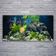 Leinwand-Bilder Wandbild Canvas Kunstdruck 120x60 Fische Steine Blätter Natur