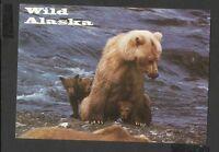 Alaska Joe Colour Postcard Brown Bear with Triplet Wild Alaska  unposted