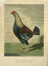 Antique 1800s STREAKY BREASTED RED DUNN C. R. STOCK Engraving Print Framed 18x25