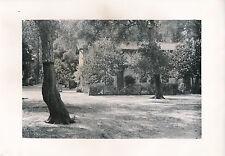 LANDES c. 1935 - 22 Photos Production de Résine Pins  Nouvelle Aquitaine - L 105