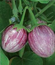 Vegetable - Aubergine - Pinstripe F1 - 5 Seeds