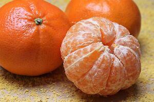 20 TANGERINE Mandarin Orange Citrus Fruit Tree Seeds