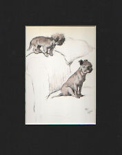 Gorgeous Pekingese Puppy Dogs by Cecil Aldin 1930 Lithograph Print 9x12 Mat