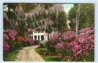 Summerville, SC - 1900s HAND COLORED POSTCARD of THE POSTERN HOUSE DRIVEWAY