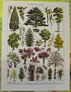 Art Print poster affiche Antique Book Page Araucaria Lilas de Perse Rosier