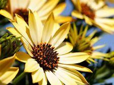 FLOWERS NATURE PLANT FLOWER MACRO YELLOW PETAL LARGE POSTER ART PRINT BB4710A
